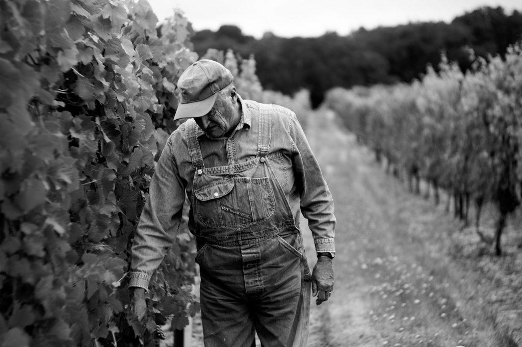 Vignerons - ERP Solutions Vins